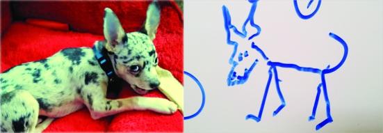 Dogg comparison