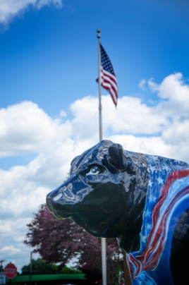 0 1 1 Bull and flag BYO_6785