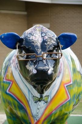 0 1 nerd bull at library 2 BYO_6627