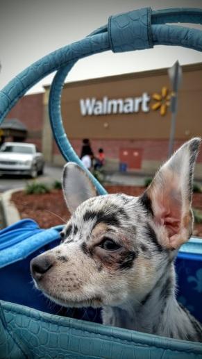 z Gus at Walmart sm